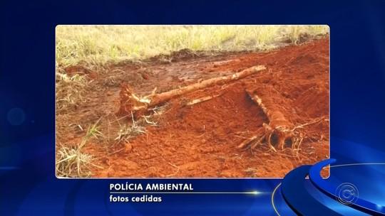 Usina de Catanduva é multada em quase R$ 10 mil por crime ambiental