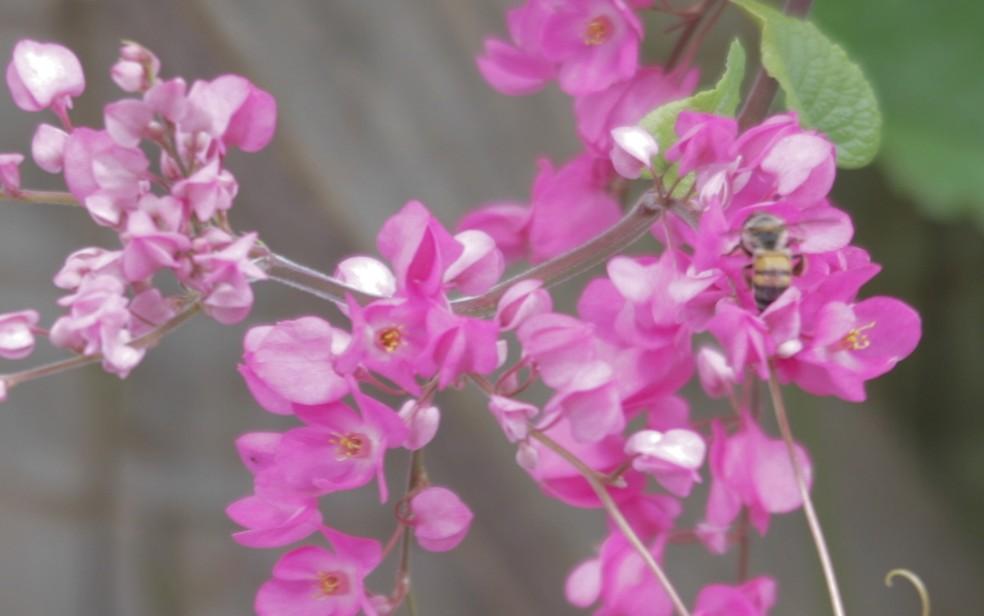 Nova espécie de abelha é descoberta em fazenda de Água Fria de Goiás — Foto: Divulgação/Bayer
