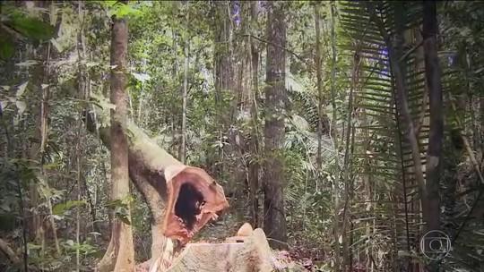 Terras públicas e áreas protegidas somam 41% do desmate na Amazônia entre agosto de 2018 e julho de 2019, diz Ipam