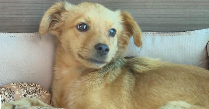 Procura por adoção de animais se mantém constante em Divinópolis durante pandemia de coronavírus, segundo ONG