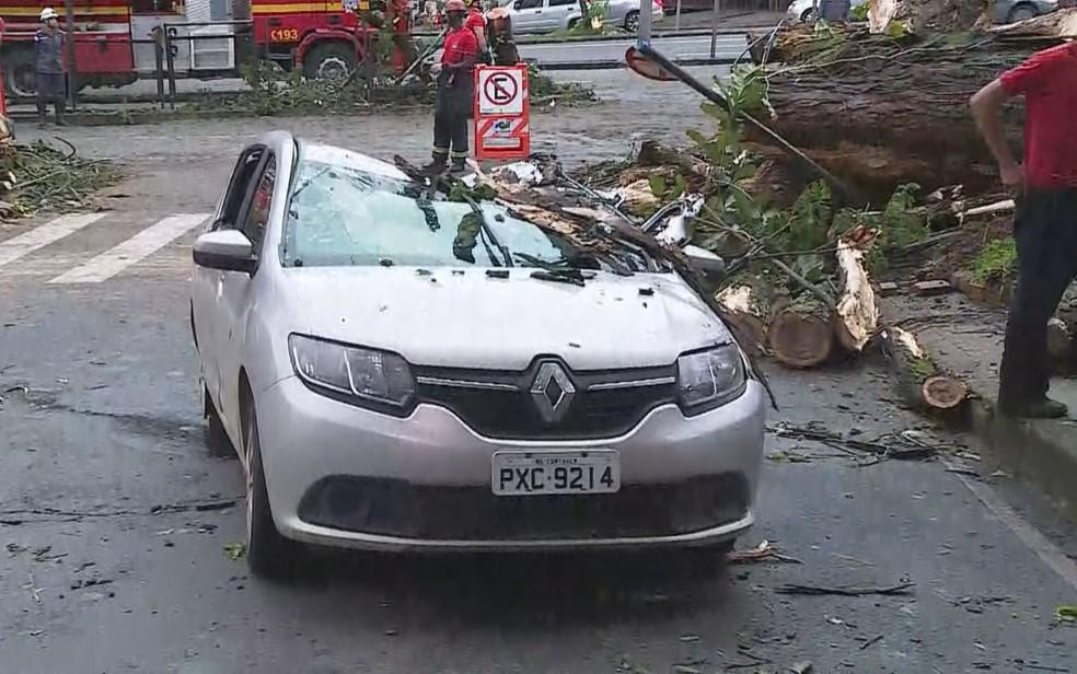 Carros foram atingidos por árvores na Savassi, em Belo Horizonte, durante temporal na noite de quinta-feira (6) — Foto: Reprodução/TV Globo