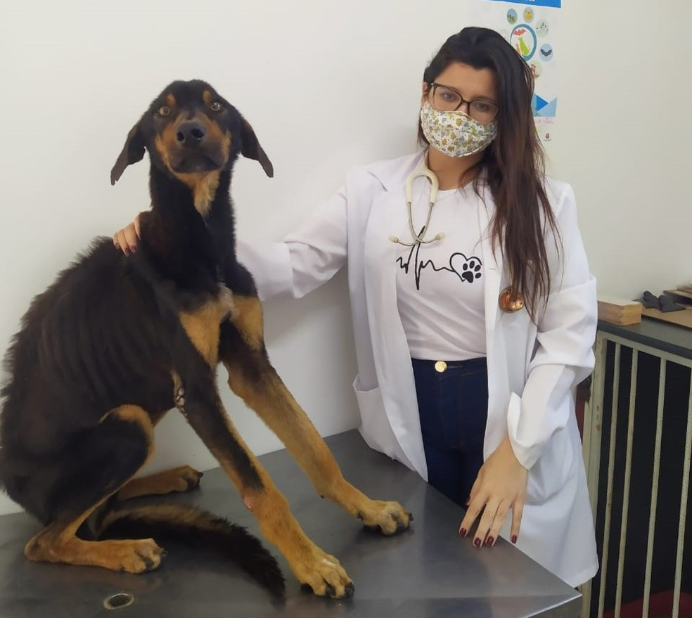 Segundo a veterinária Marielle Stephane Barbosa, do CCZ, o estado de saúde do cão macho é mais crítico — Foto: Prefeitura de Barra Bonita/Divulgação
