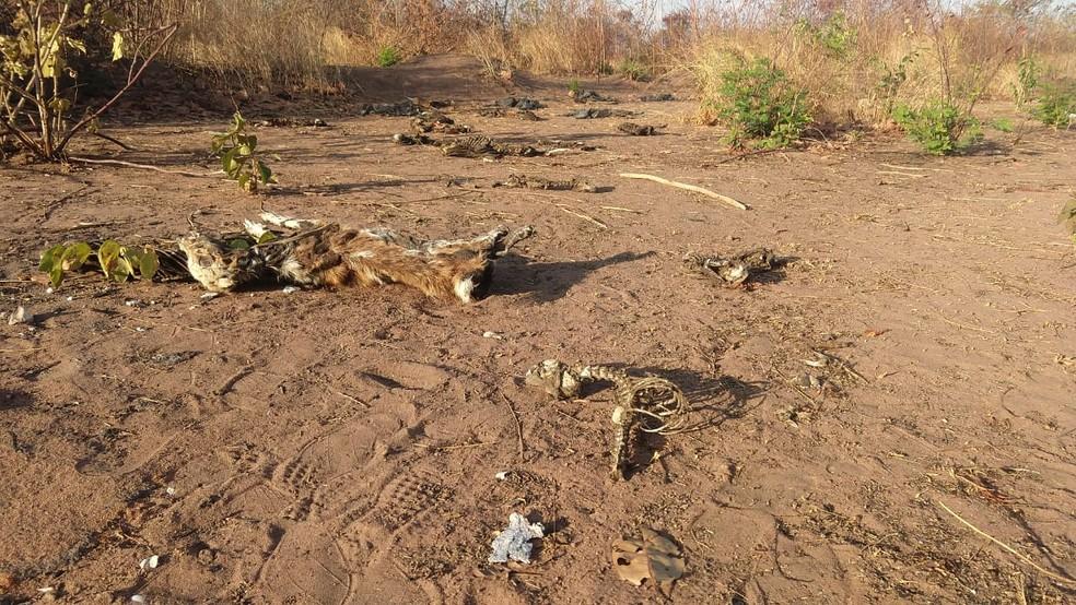 Morador encontra restos mortais de cachorros em terreno baldio de Juazeiro — Foto: Valéria Alves/ TV Verdes Mares