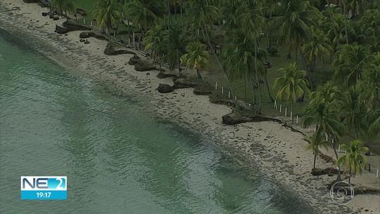 Mais de 20 toneladas de óleo são recolhidas em seis praias de três cidades