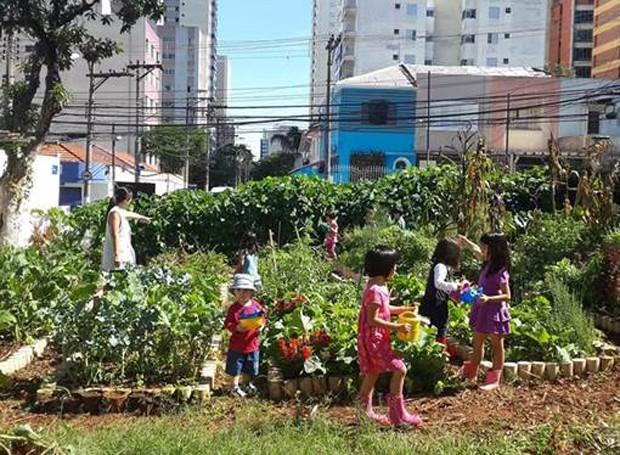 Horta comunitária da Saúde (Foto: Reprodução/Facebook)