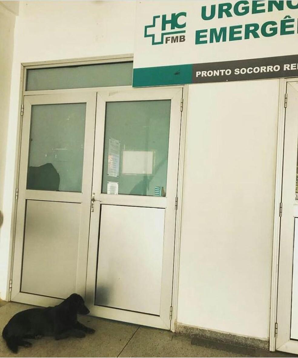 A cadela Duda, de 12 anos, esperou seu dono por 18 horas no HC de Botucatu e foi tratada com comida e água pelos funcionários (Foto: Arquivo pessoal)