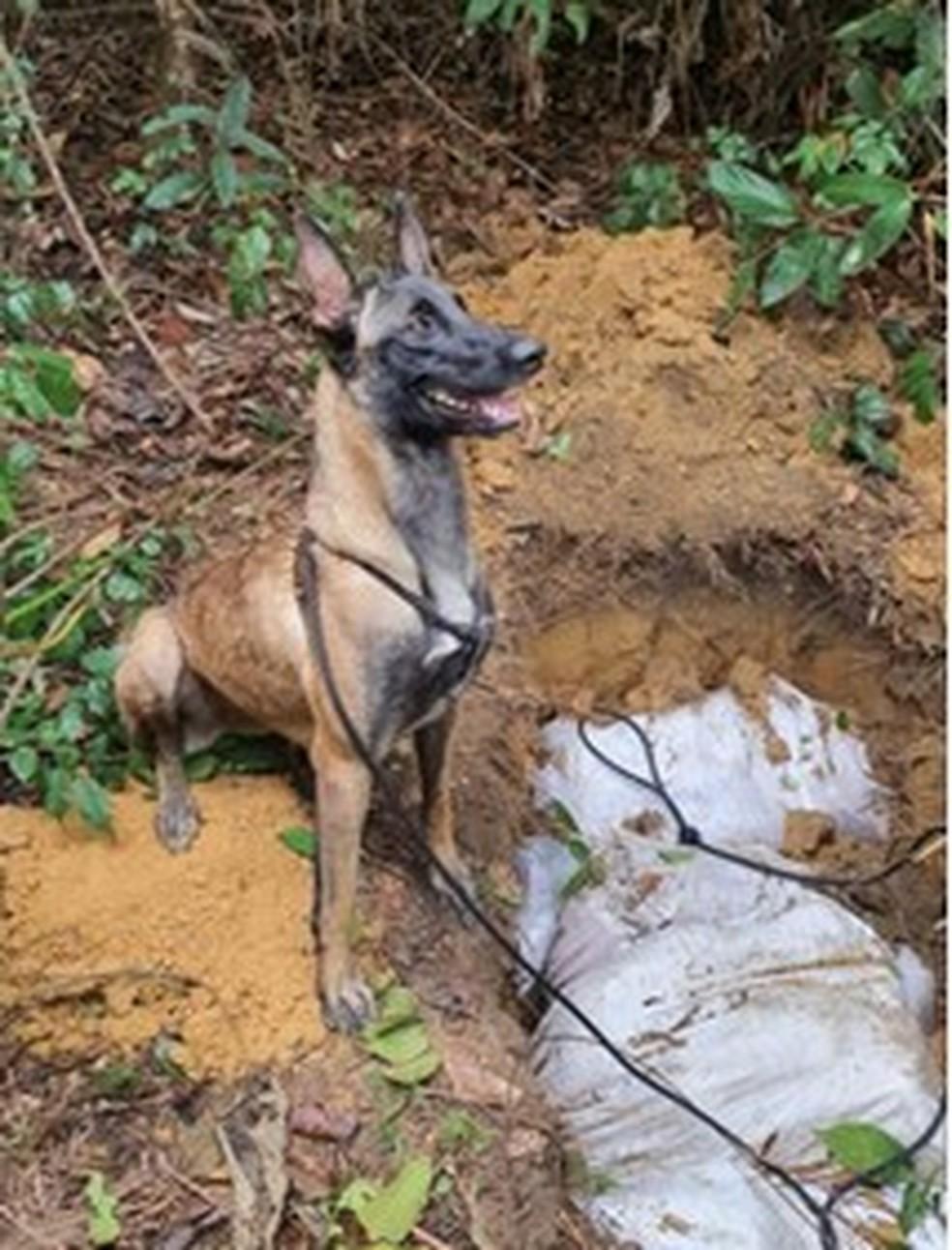 Policia achou droga enterrada com ajuda de cão farejador — Foto: Divulgação/CPI/6°BPM