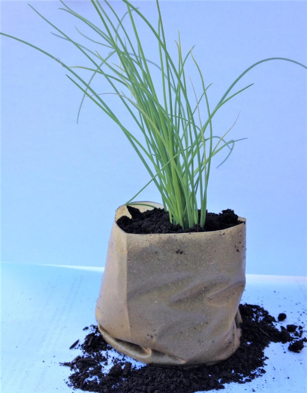 Embalagem criada com a casca do maracujá pode ser plantada com a muda e se decompõe rapidamente. — Foto: Arquivo pessoal