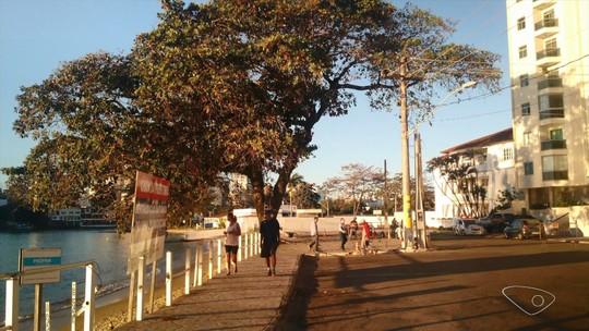 Corte de castanheiras em praia de Guarapari, ES, revolta moradores