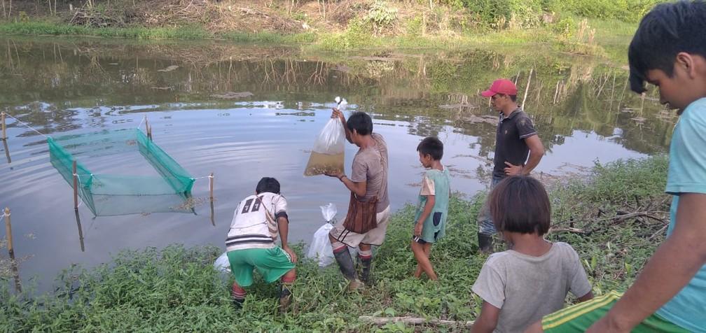 Projeto implanta açudes com produção de peixe para garantir segurança alimentar de povo indígena no AC — Foto: Arquivo/Associação Apiwtxa