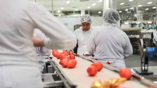 Páscoa de 2018 nem chegou e fabricantes já pensam em lançamentos até para 2021; veja como são escolhidos os ovos de chocolate