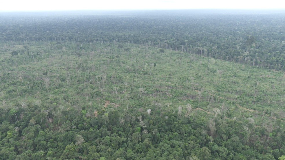 Ibama multa homem em R$ 90 mil por desmatar área de reserva ambiental em Buritis, RO (Foto: Reprodução/Rede Amazônica)