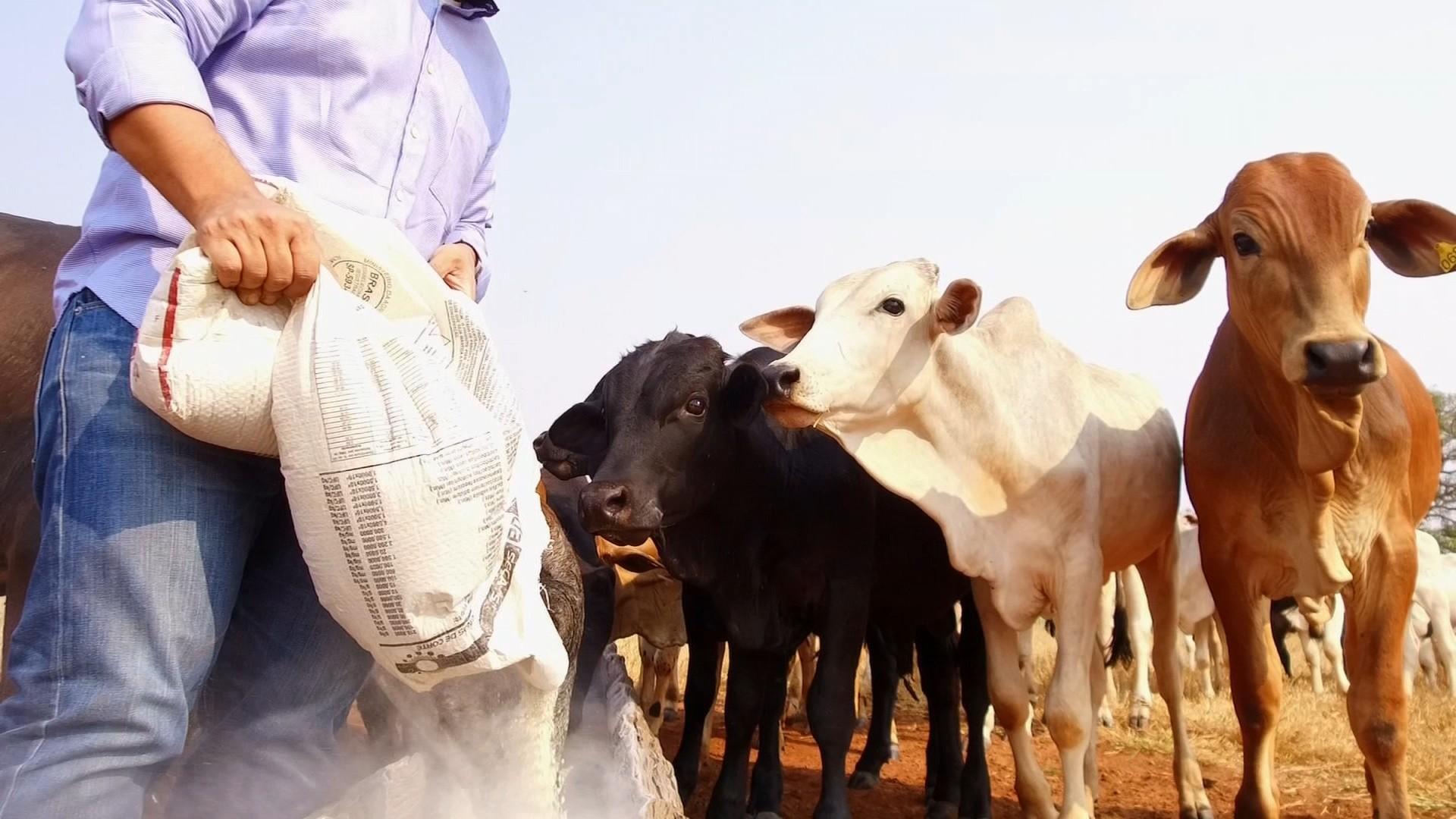 Aumento dos custos preocupa produtores rurais no interior de SP