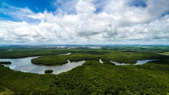 Chuva de ofertas de apoio internacional fica bem aquém das perdas do Brasil após debandada do Fundo Amazônia (Foto: Getty Images via BBC News Brasil)