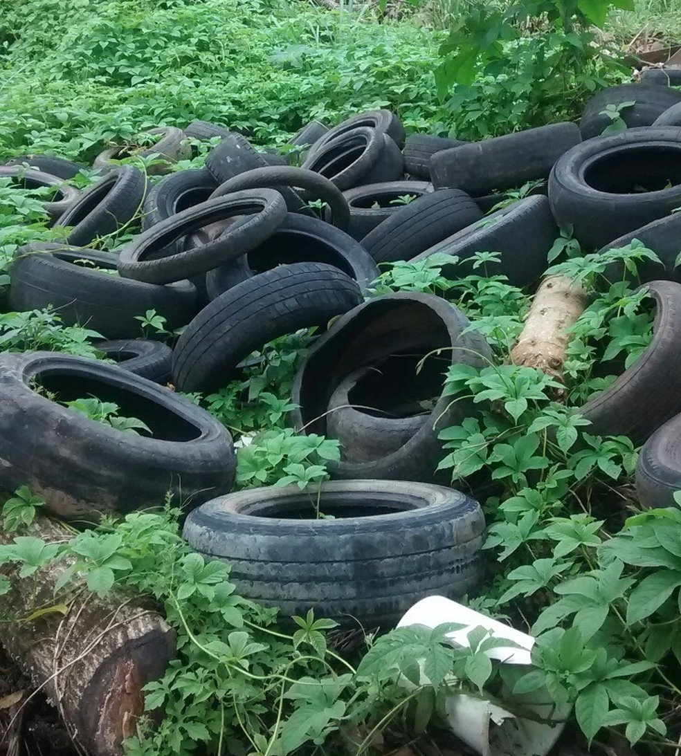 -  Descarte de pneus no Horto Municipal de Macapá atrai mosquitos  Foto: Josefa Almeida/Arquivo Pessoal
