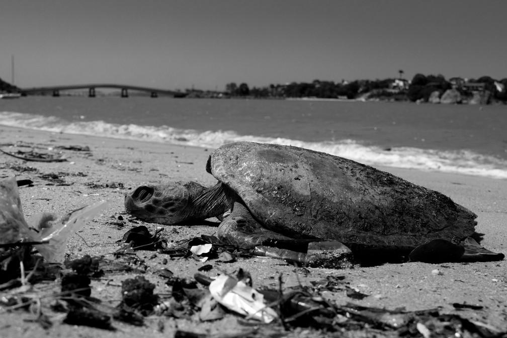 Tartaruga sofre com poluição da água — Foto: Robson dos Santos/Arquivo Pessoal