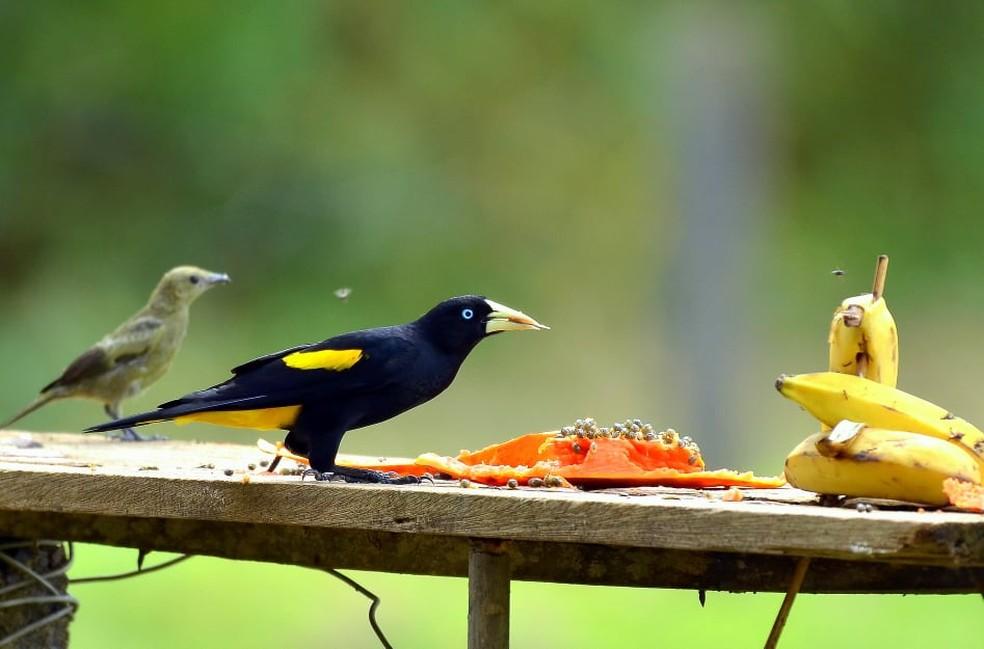 Ter comedouro é uma forma simples de atrair as aves para o quintal — Foto: Vanilce Souza/Arquivo Pessoal