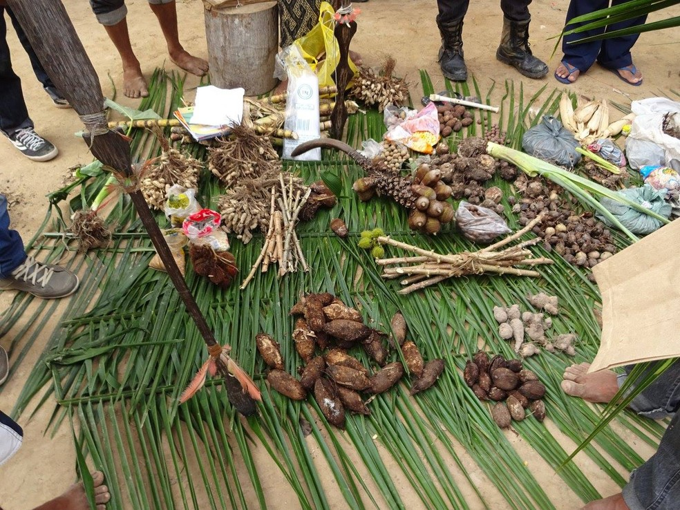 Pesquisador acredita que modo de produção agrícola indígena contribui para a conservação da biodiversidade no AC — Foto: Tomaz Lanza
