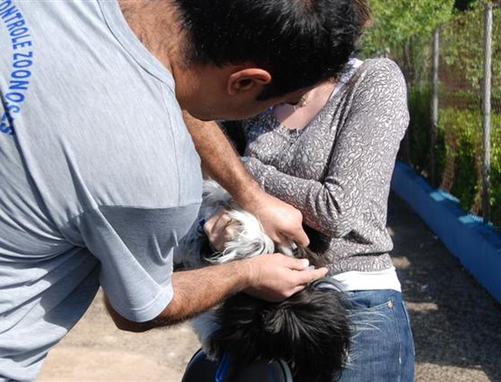 Vacina contra a raiva será aplicada a partir de 4 de maio na zona rural de Piracicaba — Foto: Arquivo/Secom