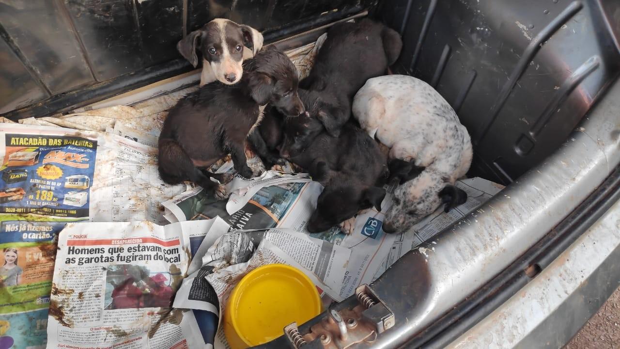 Filhotes de cachorros são resgatados em porta-malas de carro, em Cascavel  - Notícias - Plantão Diário