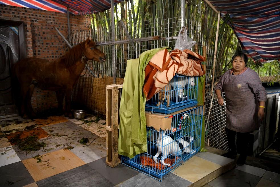 Residência chinesa serve como abrigo para mais de 1,3 mil cachorros, gatos, coelhos e cavalos abandonados — Foto: Noel Celis/AFP
