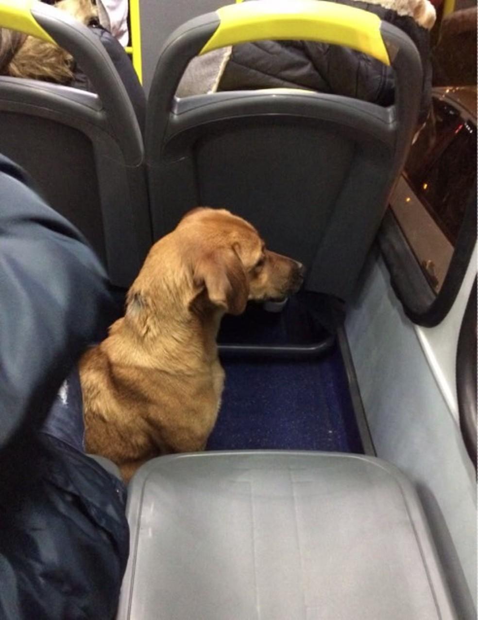 Cachorro observou o trânsito pela janela do ônibus — Foto: Arquivo pessoal/Diogo Gutierre