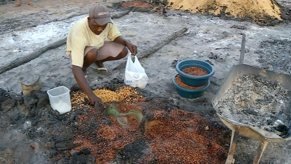 Lavrador tenta recuperar grãos queimados (Foto: Reprodução/TV Anhanguera)