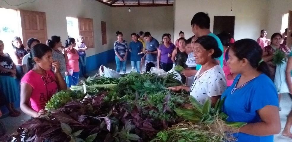 Mulheres indígenas trocando conhecimento para confecção da cartilha — Foto: Foto:AscomCIRR/Marizete de Souza Macuxi/Reprodução