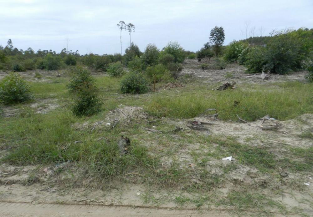 Restos mortais foram localizados em Araranguá e enviados para análise (Foto: Polícia Civil/Divulgação)