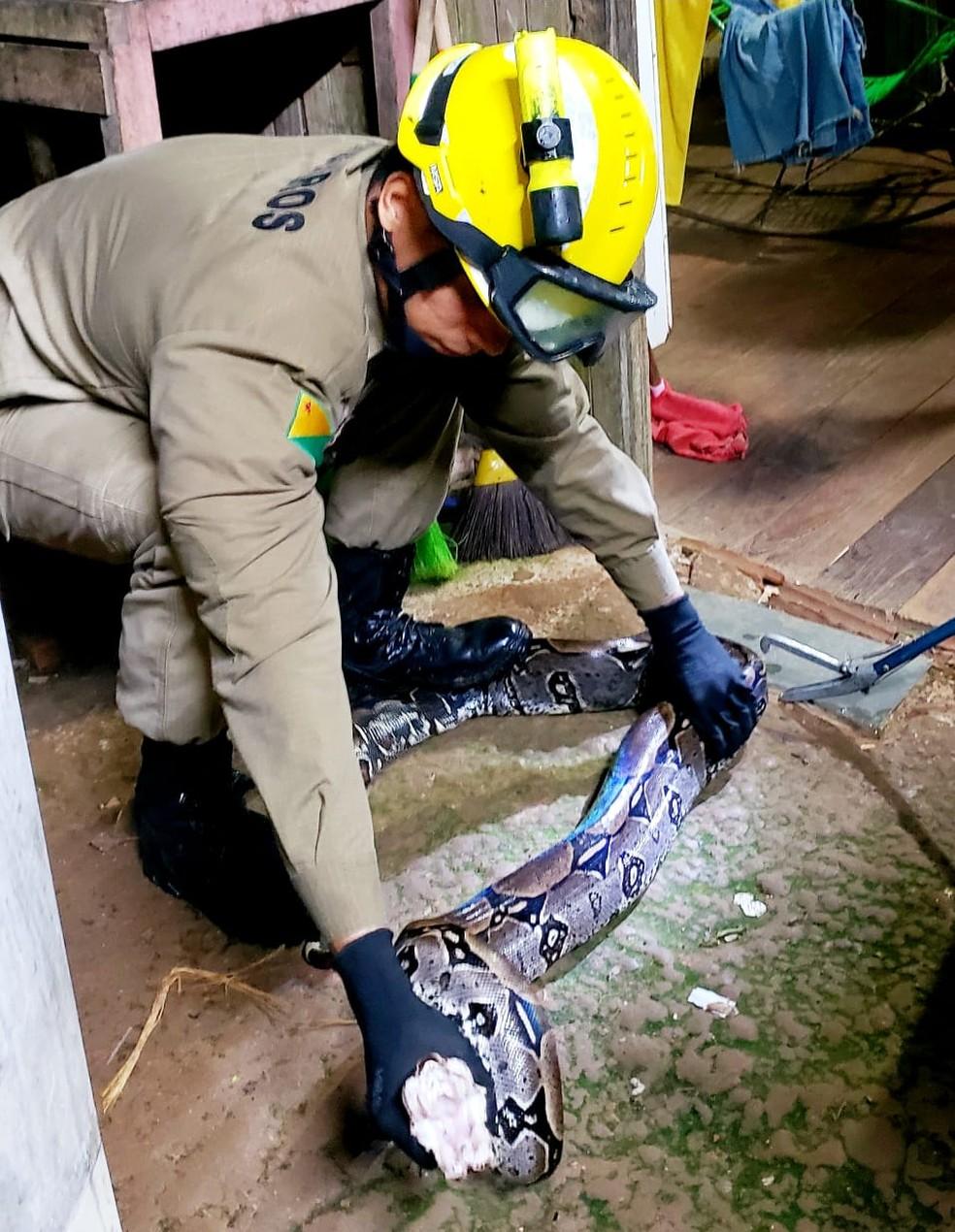 Nas últimas 24 horas, bombeiros capturaram 10 cobras em Rio Branco — Foto: Divulgação/Corpo de Bombeiros