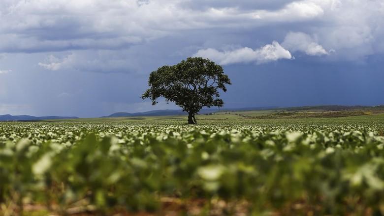 árvore-campo-vegetação (Foto: Marcelo Camargo/Agência Brasil)