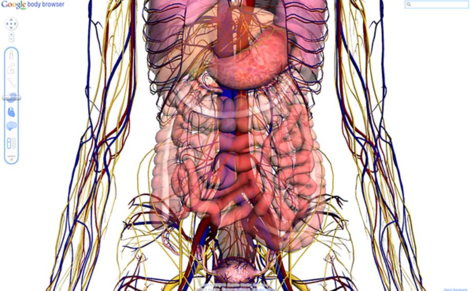 Famoso Google Body Browser Anatomía Regalo - Imágenes de Anatomía ...