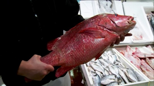 Conheça as surpresas do maior mercado de peixes do Reino Unido