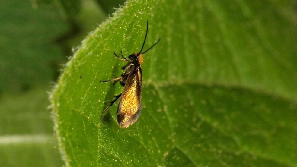 As escamas recém-descobertas são semelhantes às que são vistas nesta mariposa  (Foto: Hossein Rajaei)