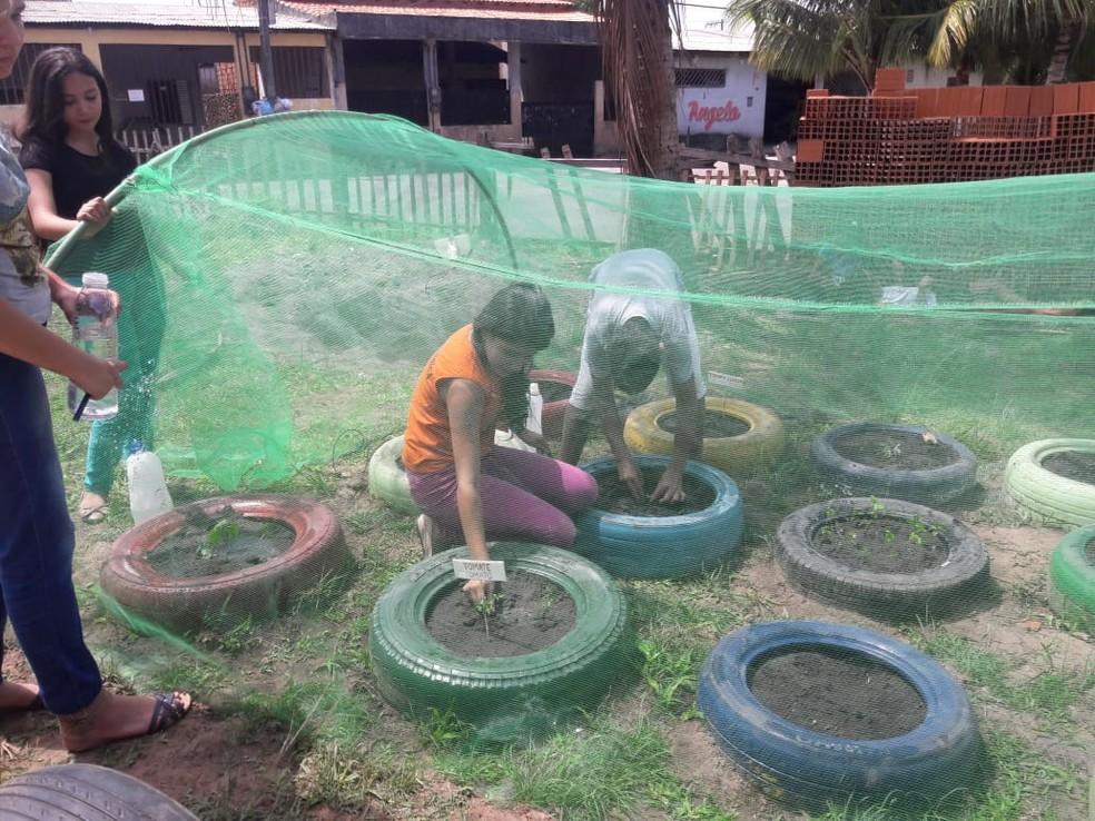 Na escola, alunos aprendem a fazer horta em pneus  (Foto: Dilma Guerreiro )