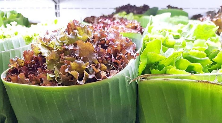 Embalagens de folha de bananeira adotadas pela mercearia paulista Casa Santa Luzia (Foto: Reprodução/Facebook)