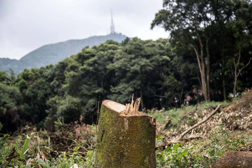 Pico do Jaraguá ao fundo com árvore de mata nativa cortada no terreno na Zona Norte de SP — Foto: Reprodução/Facebook