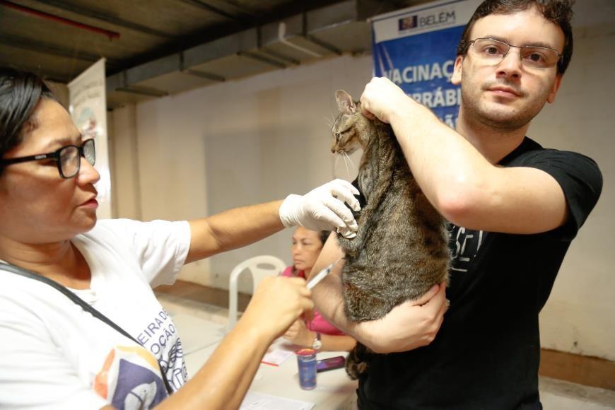 Feira promove a adoção de cães e gatos e oferece vacina antirrábica em Belém