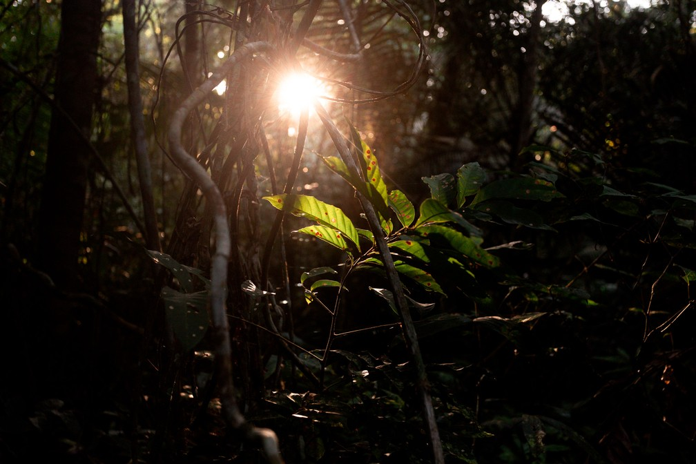 O amanhecer é visto de dentro da Floresta Nacional do Tapajós, na região de Santarém (PA) — Foto: Marcelo Brandt/G1