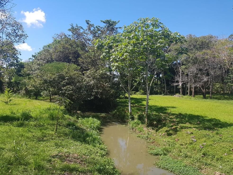 Após incêndio, parque Capitão Ciríaco passa por reflorestamento com suporte técnico da Embrapa em Rio Branco — Foto: Arquivo/Embrapa