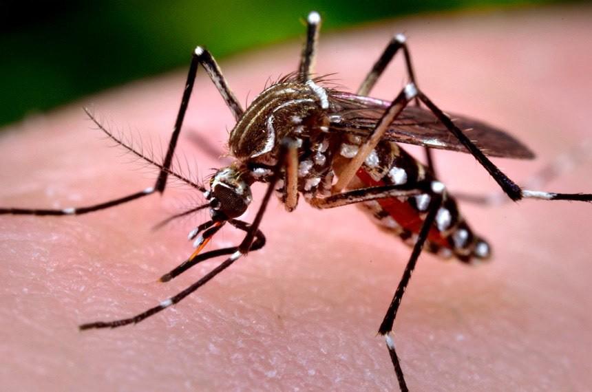 Número de casos dengue no Rio aumenta quase 60% em 2019