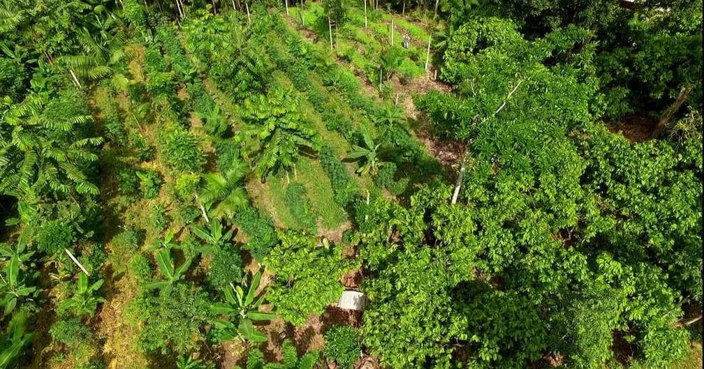 Para especialistas, a economia vegetariana só irá acontecer se os países adotarem essa política gradualmente — Foto: Globo Rural/Reprodução