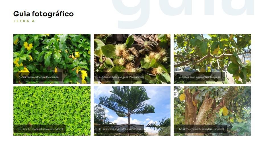 Pesquisadores da Uenf publicam guia com espécies vegetais de praças e jardins públicos de Campos, no RJ