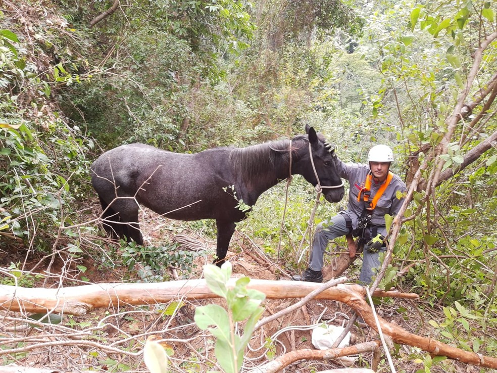 Cavalo não apresentava sinais aparente de ferimentos: queda pode ter sido amortecida por galhos e cipós — Foto: Corpo de Bombeiros/Divulgação