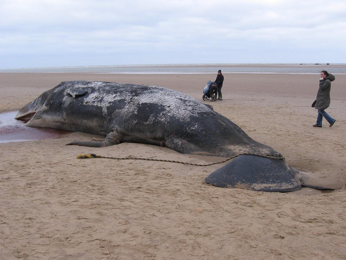 Novo estudo culpa tempestades solares por encalhe em massa de baleias