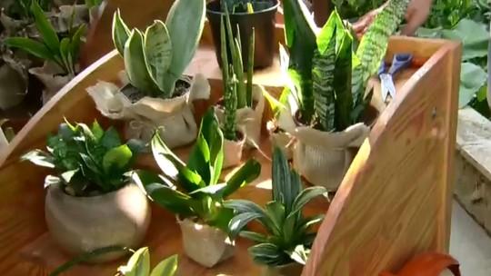 Jardinagem: veja dicas simples para ter um cantinho verde em casa