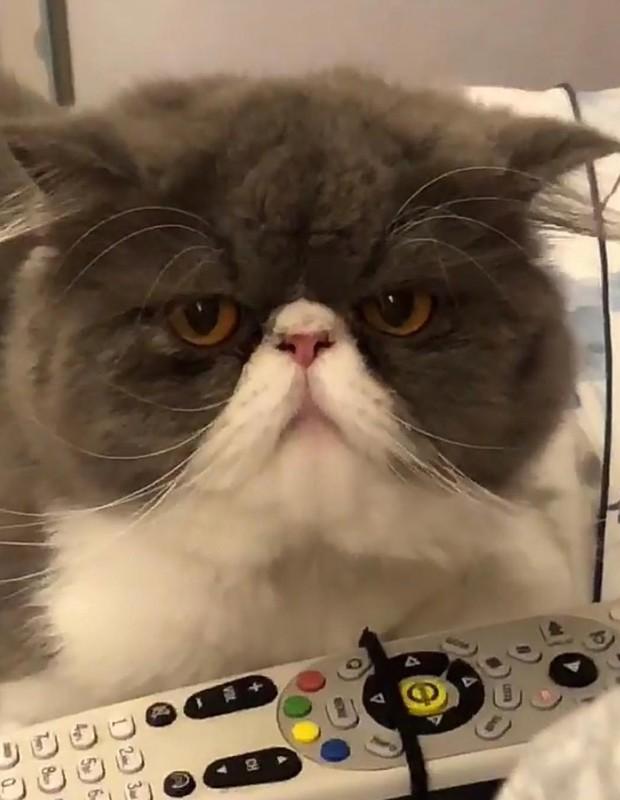 Tufo, um dos 12 gatos de Tatá Werneck (Foto: Reprodução/Instagram)
