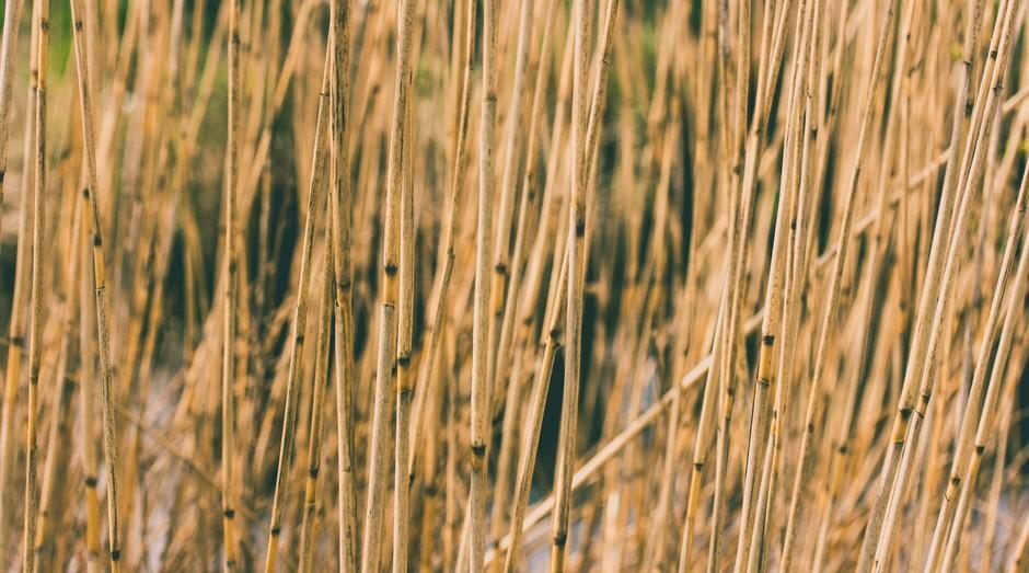 cana de açúcar, cana, açúcar (Foto: Reprodução/Pexels)