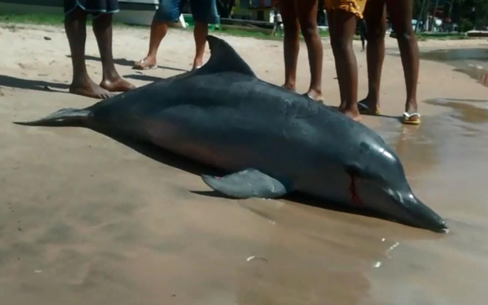 Golfinho pode ter morrido afogado após ficar preso em rede de pesca (Foto: André In9 Pró/Arquivo Pessoal)
