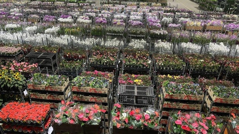 Pátio de flores para comercialização no Dia das Mães (Foto: Cooperativa Veiling Holambra/Divulgação)